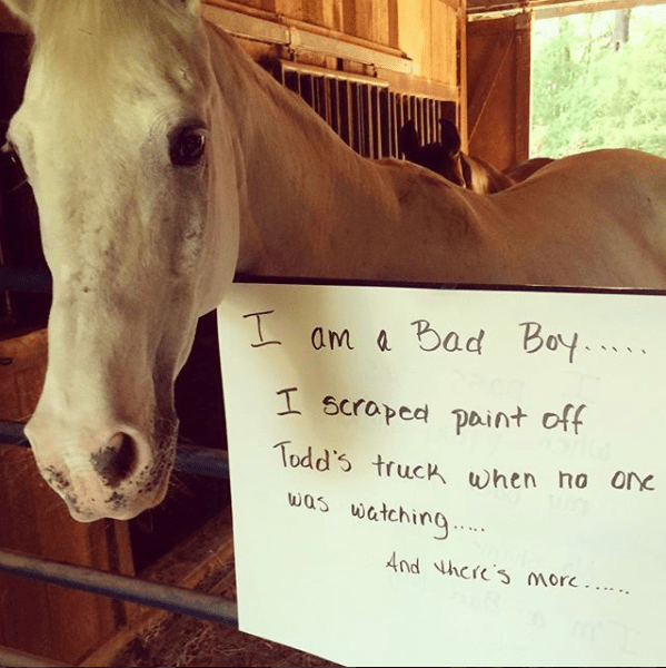 15 Times Horses Were Publicly Shamed By Their Owners - I Can Has Cheezburger?