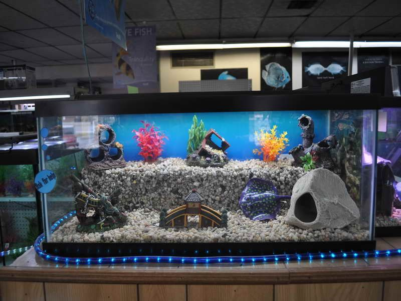 I like the different levels in this aquarium my own for Aquarium decoration ideas freshwater