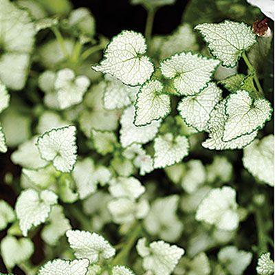 17 quick winter garden spruceups – Plants for Winter Garden
