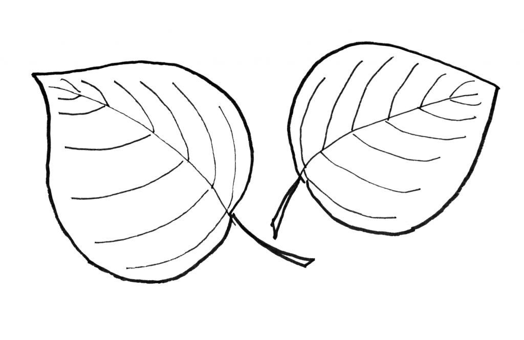 картинки для рисования листья деревьев молодой, веселись, папа