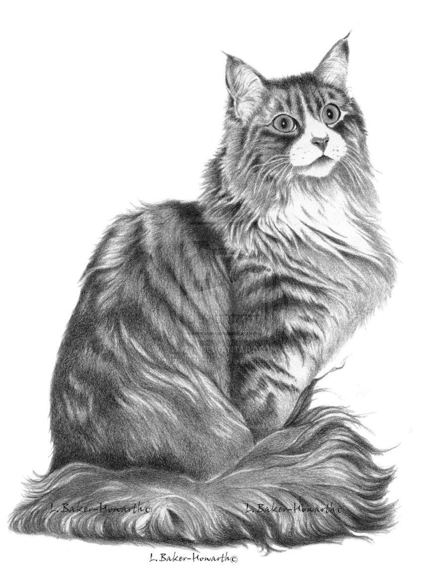 Рисунок кошки картинки и рисунки кошек