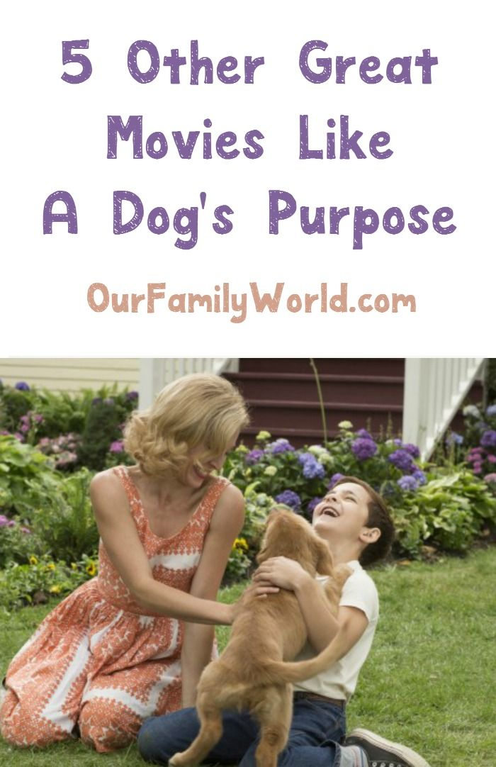 5 Great Family Movies Like A Dog S Purpose A Dogs Purpose A