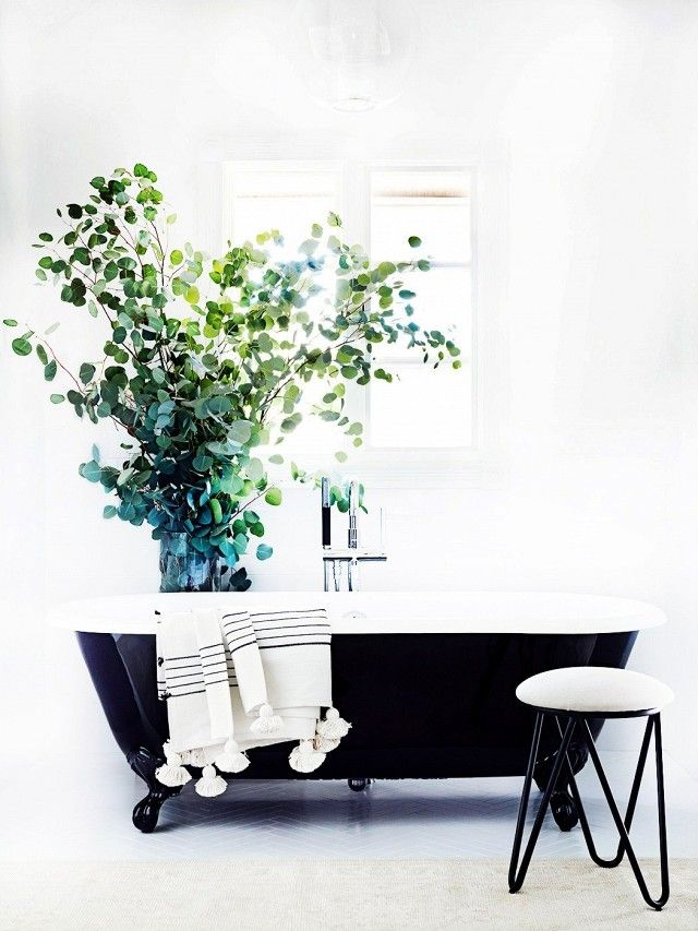 Simple bathroom with a black clawfoot tub, a large indoor plant, and white tiles