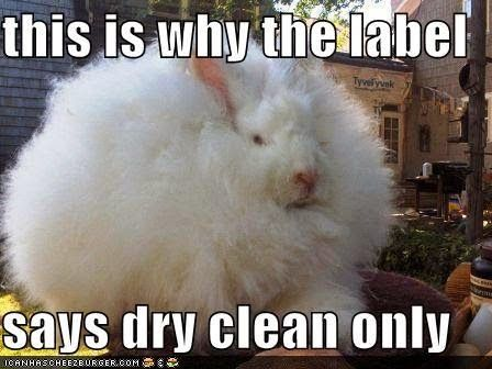 Dry Clean Only Jpg 448 336 With Images Cute Animal Memes