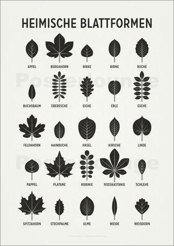 Iris Luckhaus Heimische Blattformen Form Poster Heimische Baume Baum Blatter