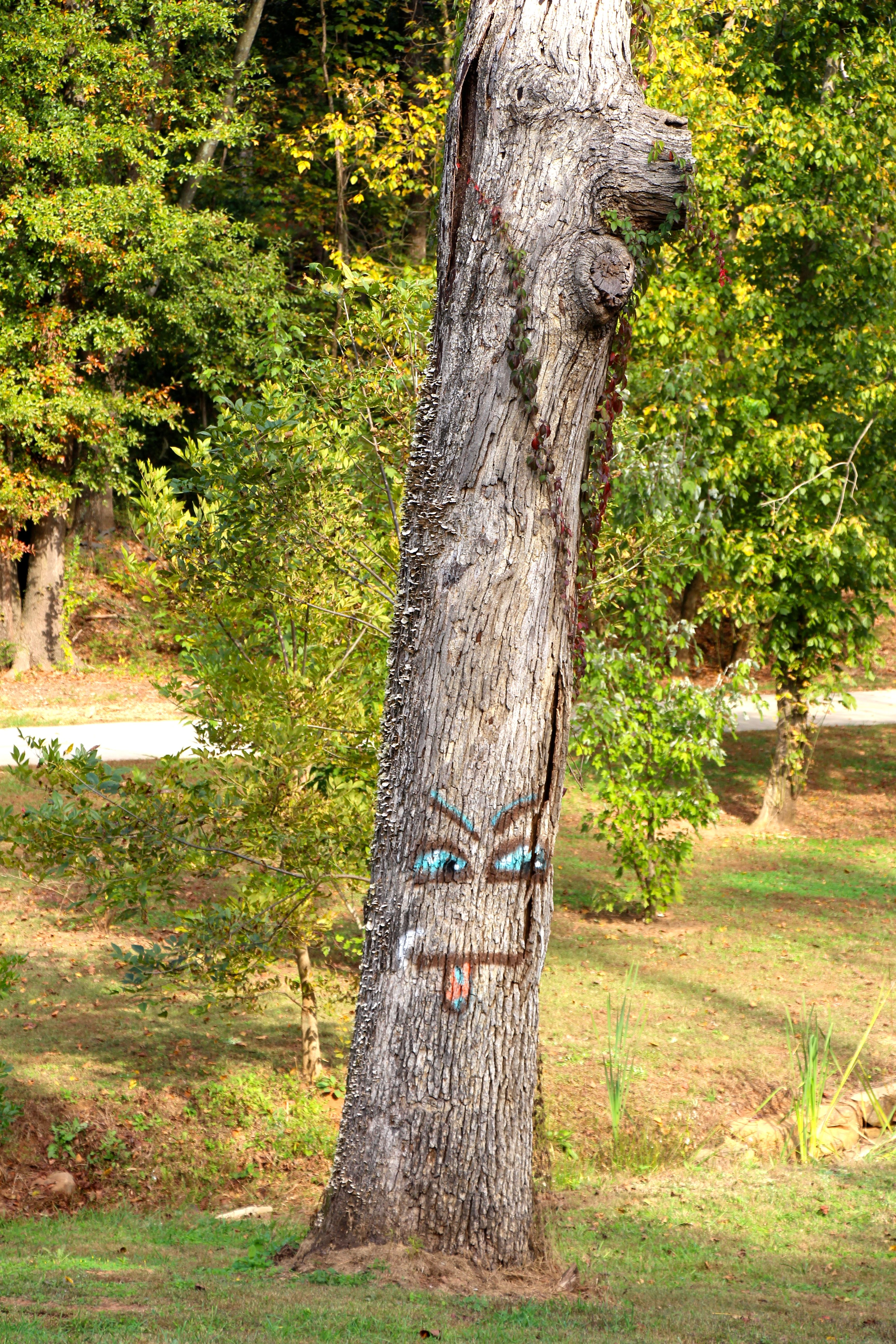 This tree sticks out his tongue at us every day!