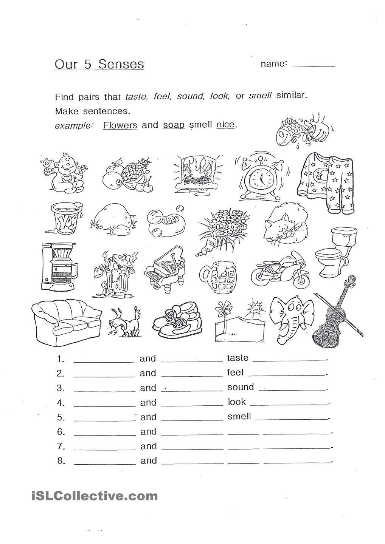 Our 5 Senses the five senses Pinterest Worksheets