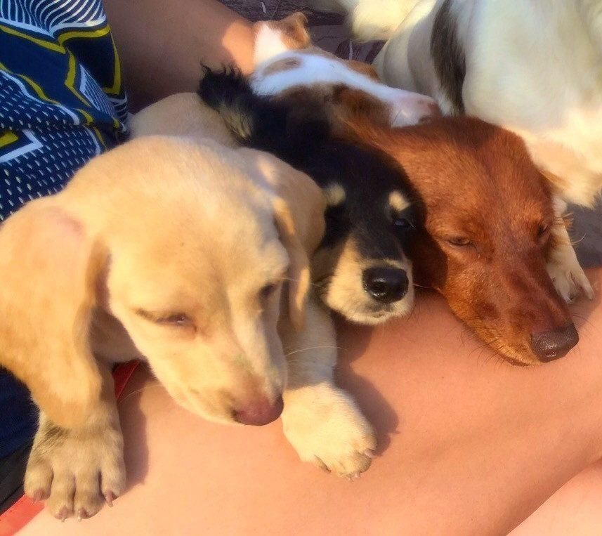 Gallery Dachshund Puppies For Sale Dachshund Puppies Funny