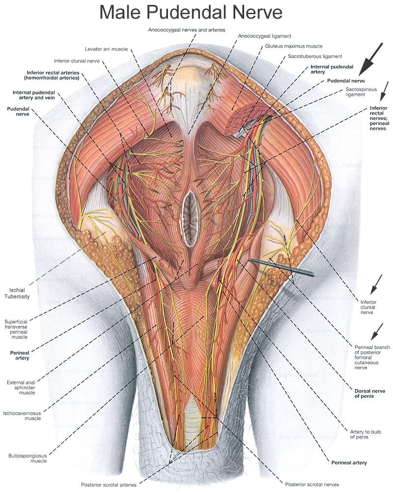 small resolution of anatomy male groin anatomy male groin pictures anatomy of male groin bones diagram