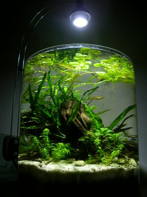 Curvilinear Ii Page 2 Nano Aquariums Aquatic Plant Central Aquarium Design Nano Aquarium Aquascape
