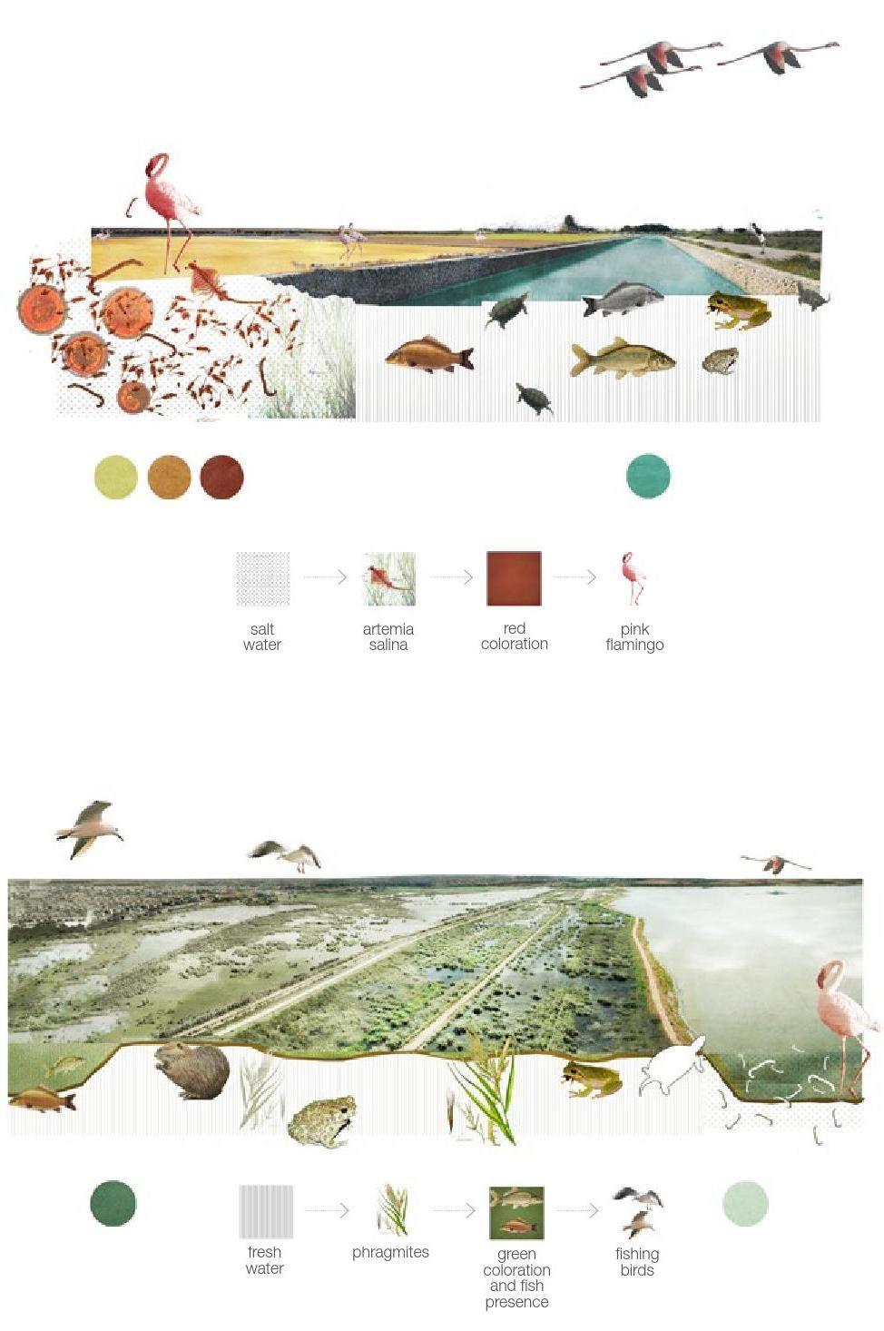 Clippedonissuu from landscape architecture portfolio clippedonissuu from landscape architecture portfolio pooptronica Gallery