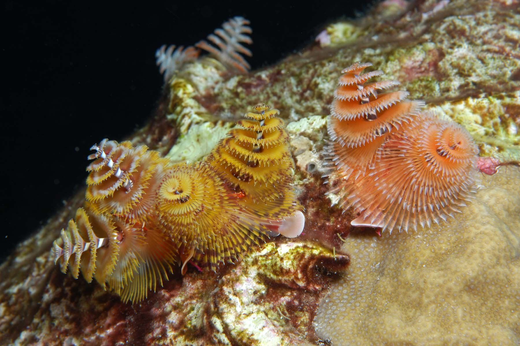 History Travel Arts Science People Places National Marine Sanctuary Ocean Habitat Marine