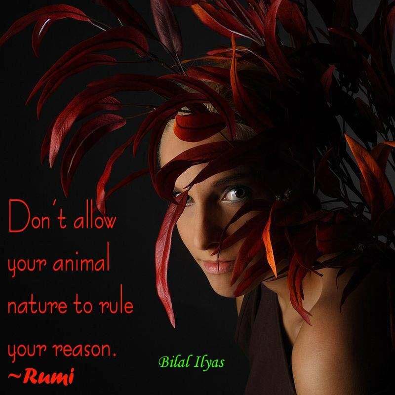 Don't allow your animal nature  to rule your reason.  ~#Rumi