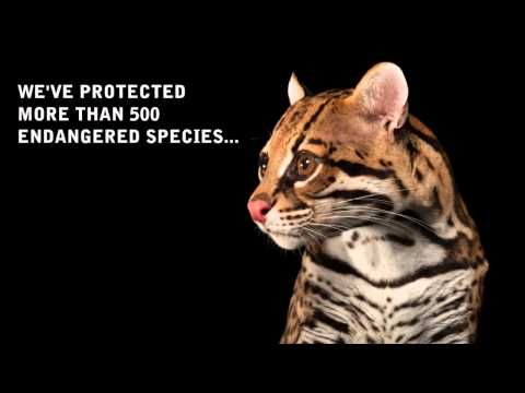 Center for Biological Diversity BREAKING NEWS OBAMA REJECTS KEYSTONE XL FOR GOOD!