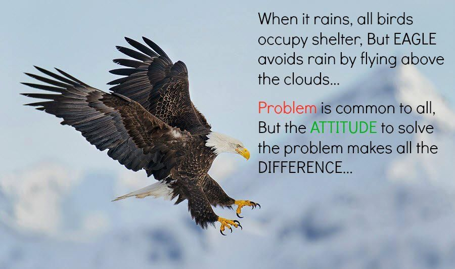 When It Rains All Birds Fly For Shelter But Eagle Avoides Rain By Flying Above The Clouds Problem Is Common For All B Eagles Quotes All Birds Cloud Quotes