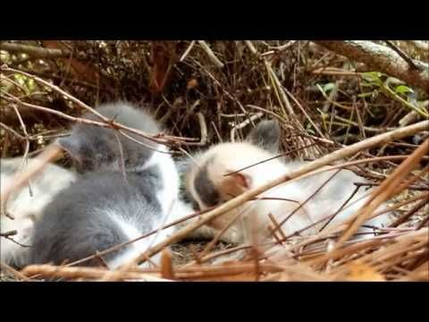Kittens sound sleep under the bush #4. 23 days old kittens ...