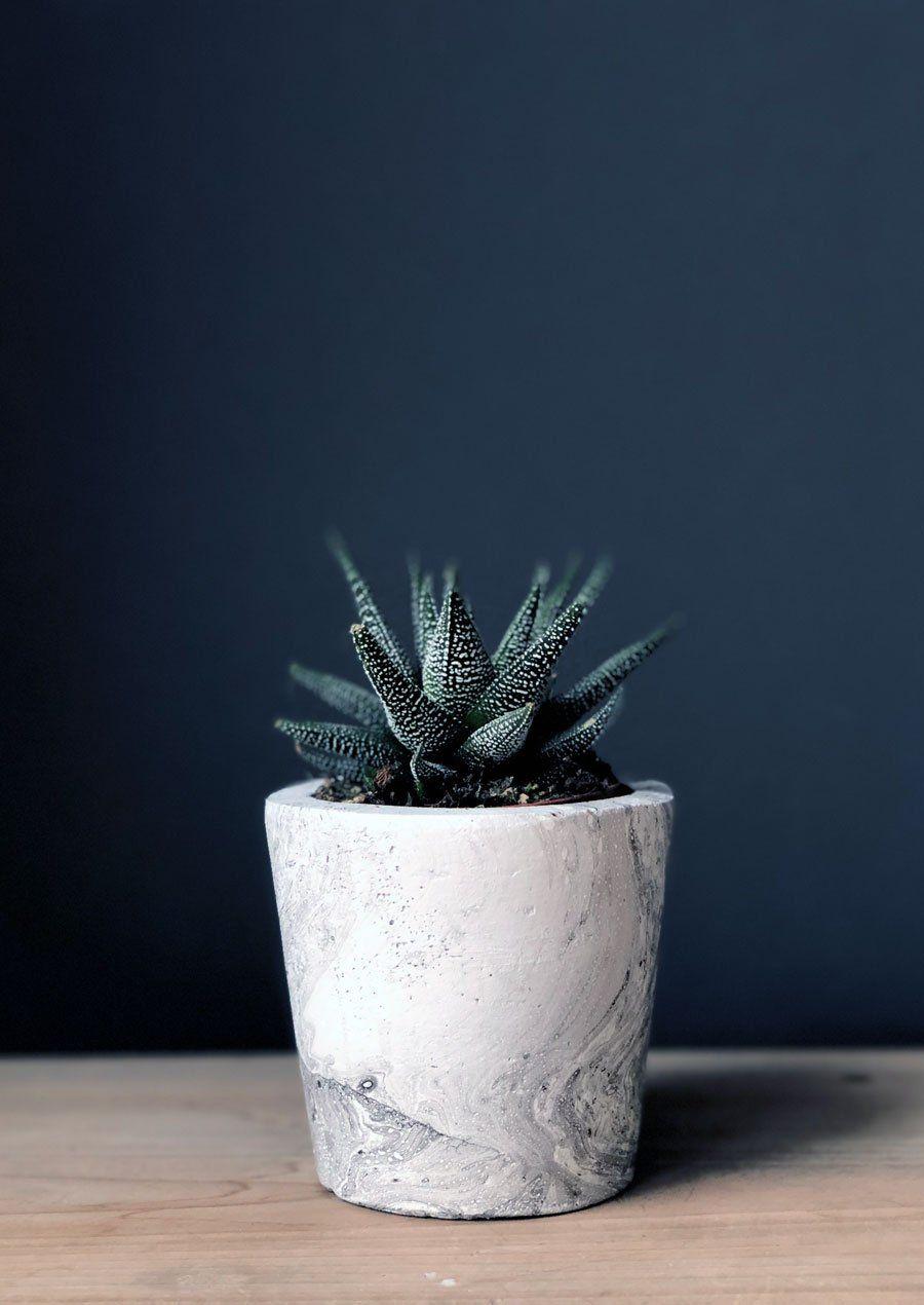 small Cement SucculentCactusAir Plant Pots