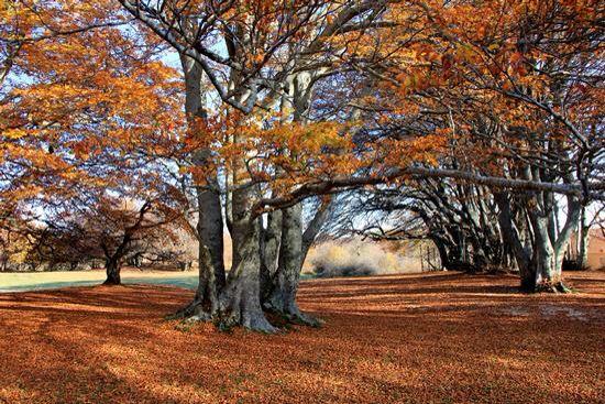 faggi e colori - riserva naturale del Canfaito   San Severino Marche