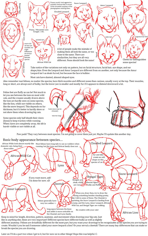Big Cat Anatomy Sketches by BloodLust-Carman.deviantart.com on ...