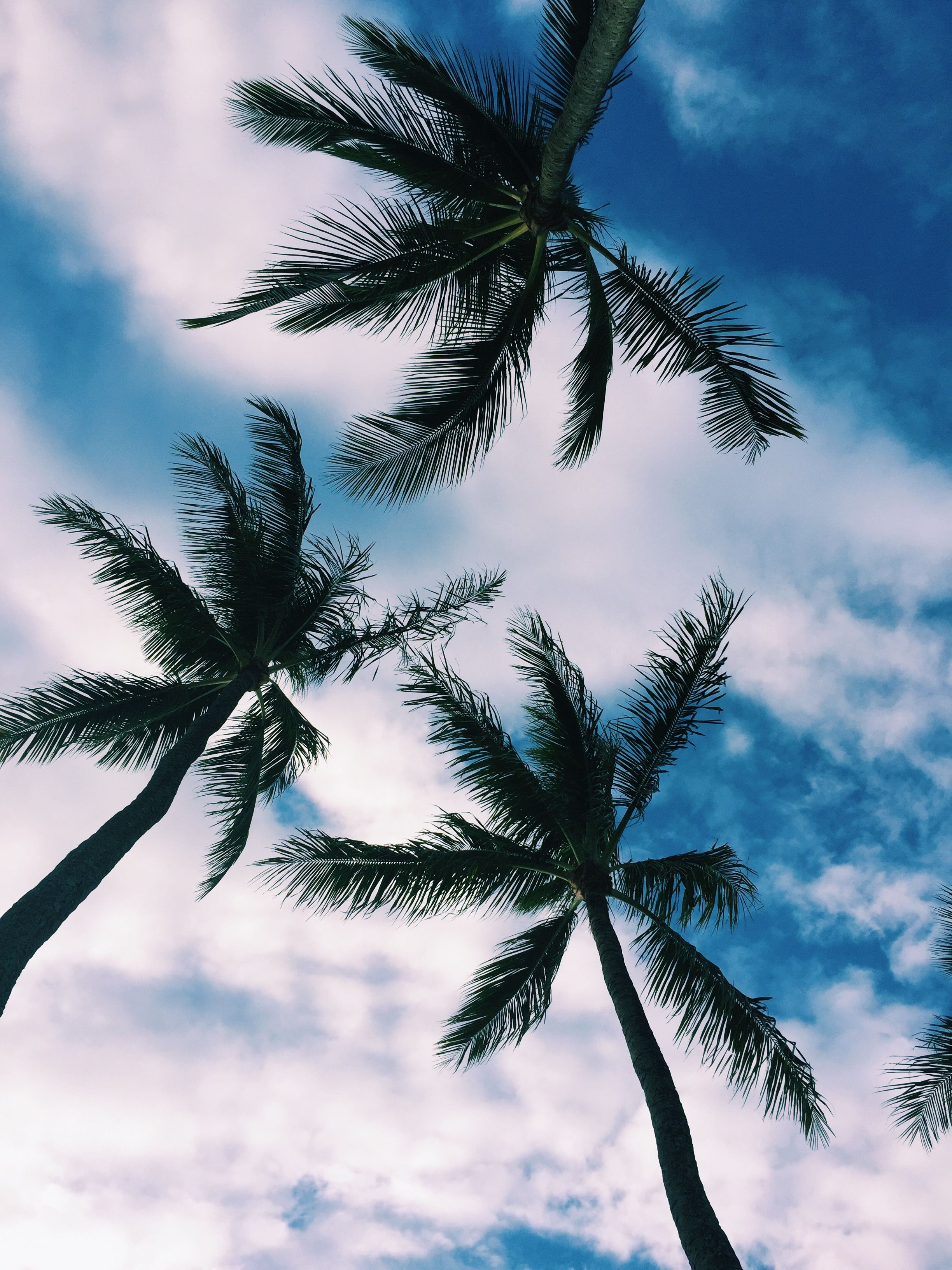 Palm trees Wallpaper iphone summer, Nature photography