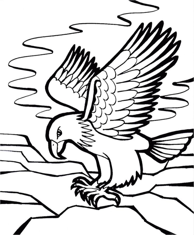 44+ Cartoon eagle coloring pages info