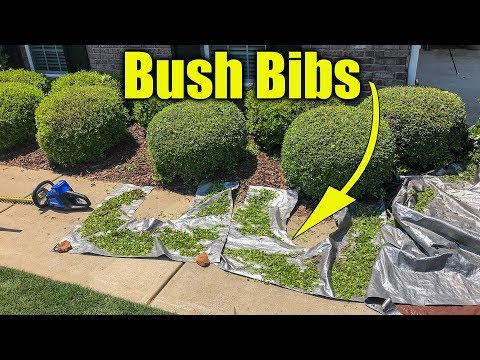 Best Way To Clean Up Clippings When Trimming Shrubs Google Search How To Trim Bushes Trimming Hedges Grass Edging
