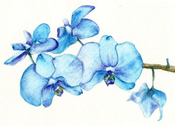 Blue Orchids Two Watercolor Art Print Watercolor Orchid Tattoo