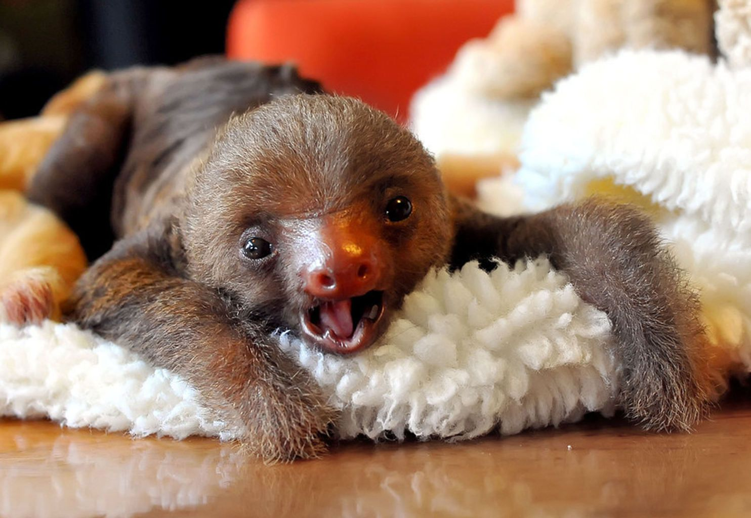 Sloth sanctuary   Just hanging out: Meet the adorable occupants of Costa Rica's 'sloth sanctuary' - Yahoo News UK