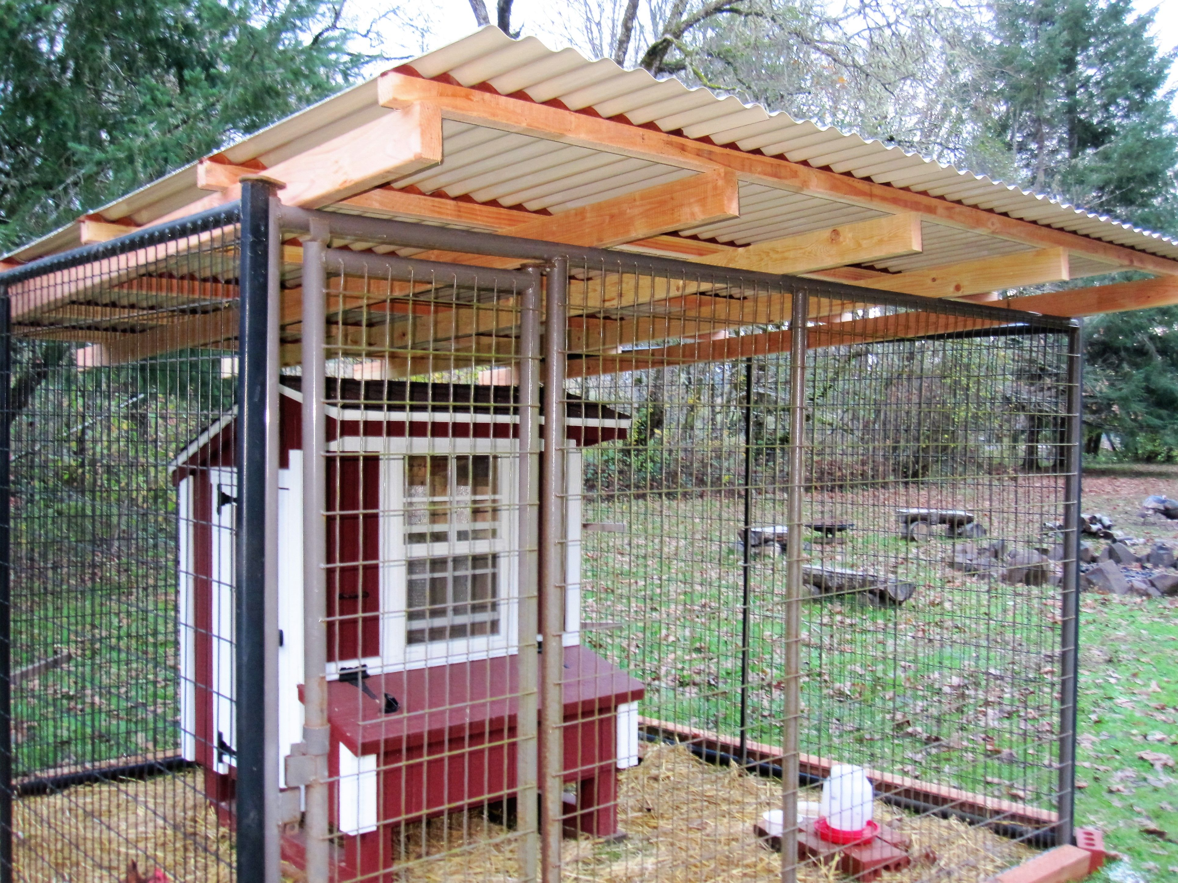My Husband Don Put On New Beige Colored Pvc Corrugated Roof On Chicken Run For Little Red Nov 2016 Building A Chicken Run Corrugated Roofing Chicken Runs