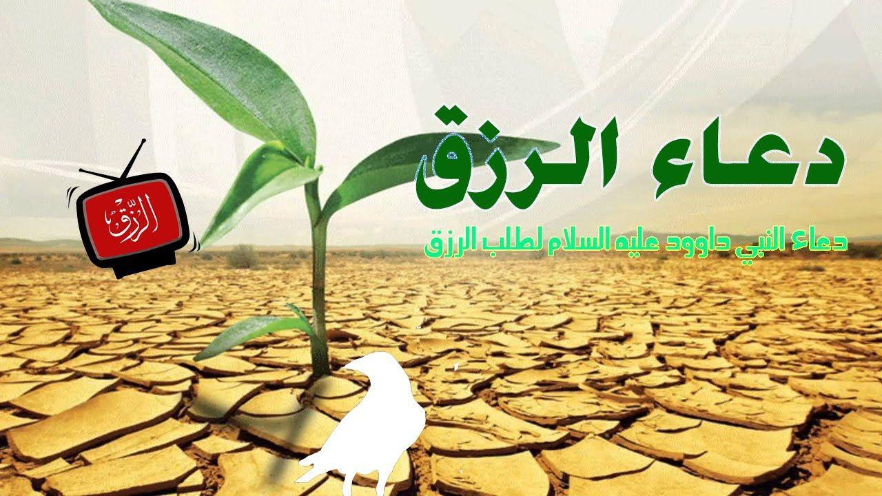 دعاء النبي داوود عليه السلام لطلب الرزق Plants