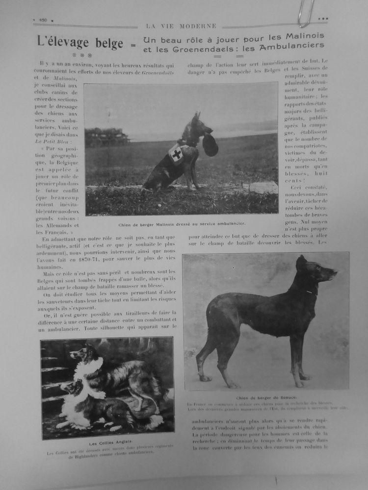 1910 VM ELEVAGE BELGE MALINOIS GROENENDAELS AMBULANCIER CROIX ROUGE COLLIES GB