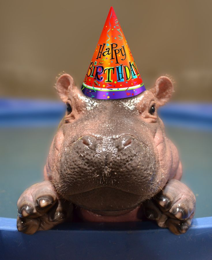 Photo of Fiona's First Birthday Party – The Cincinnati Zoo & Botanica…