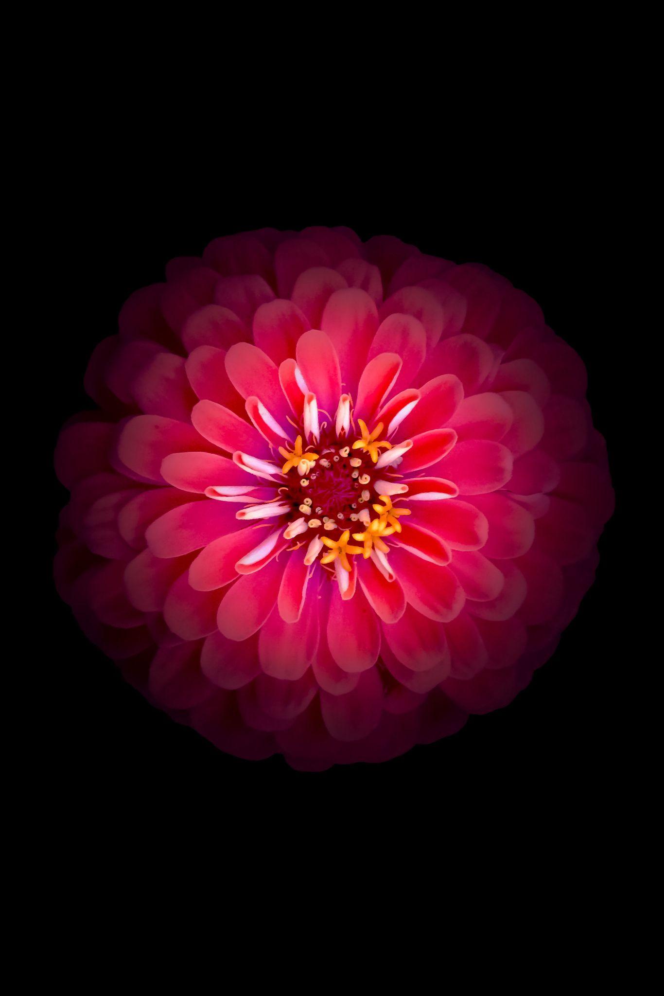 выбор модульных картинки цветка как на айфоне неделя