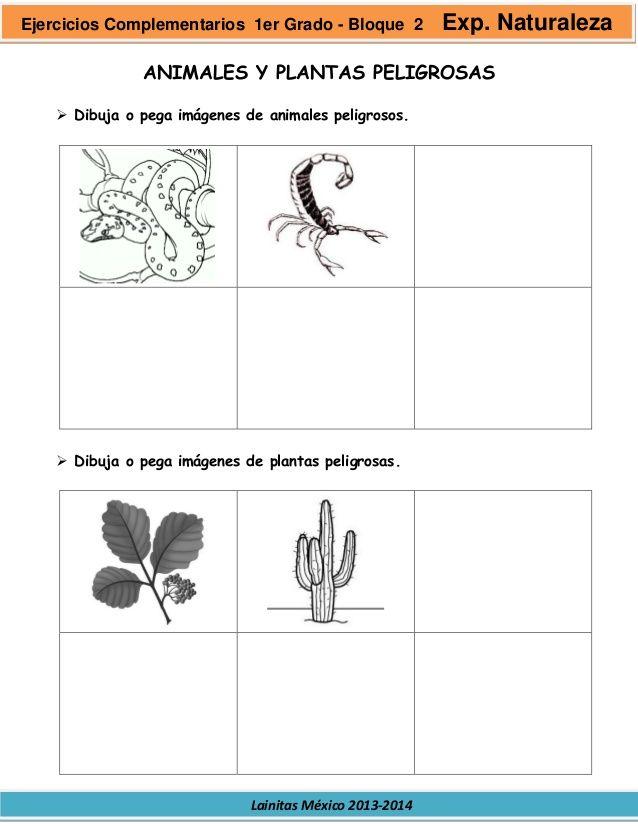 Resultado De Imagen Para Imagenes De Plantas Peligrosas Para Dibujar