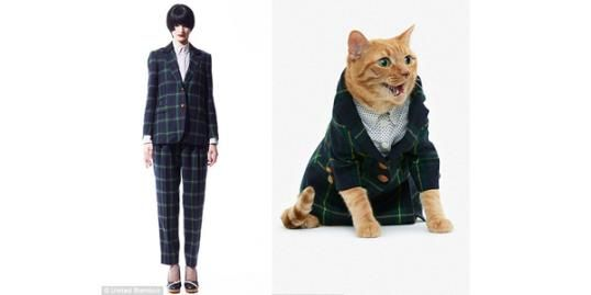 You and your cat can wear matching designer clothes ...
