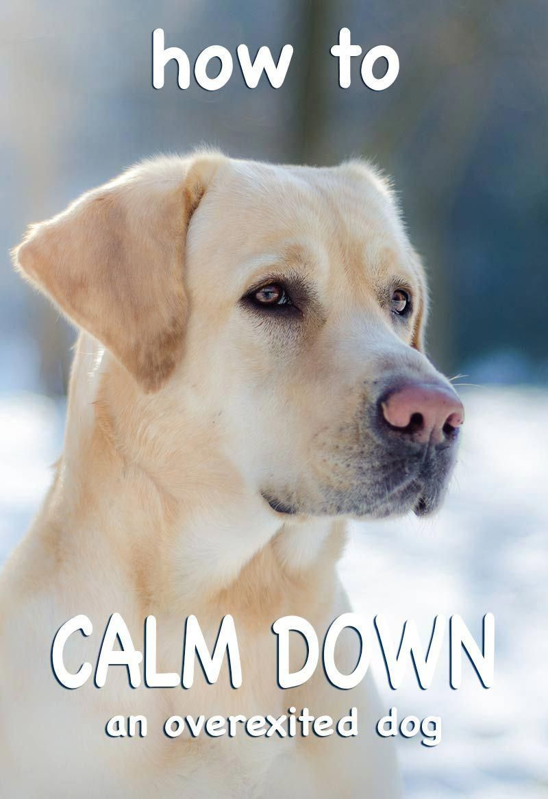 Dog calming how to calm a dog down great tips and