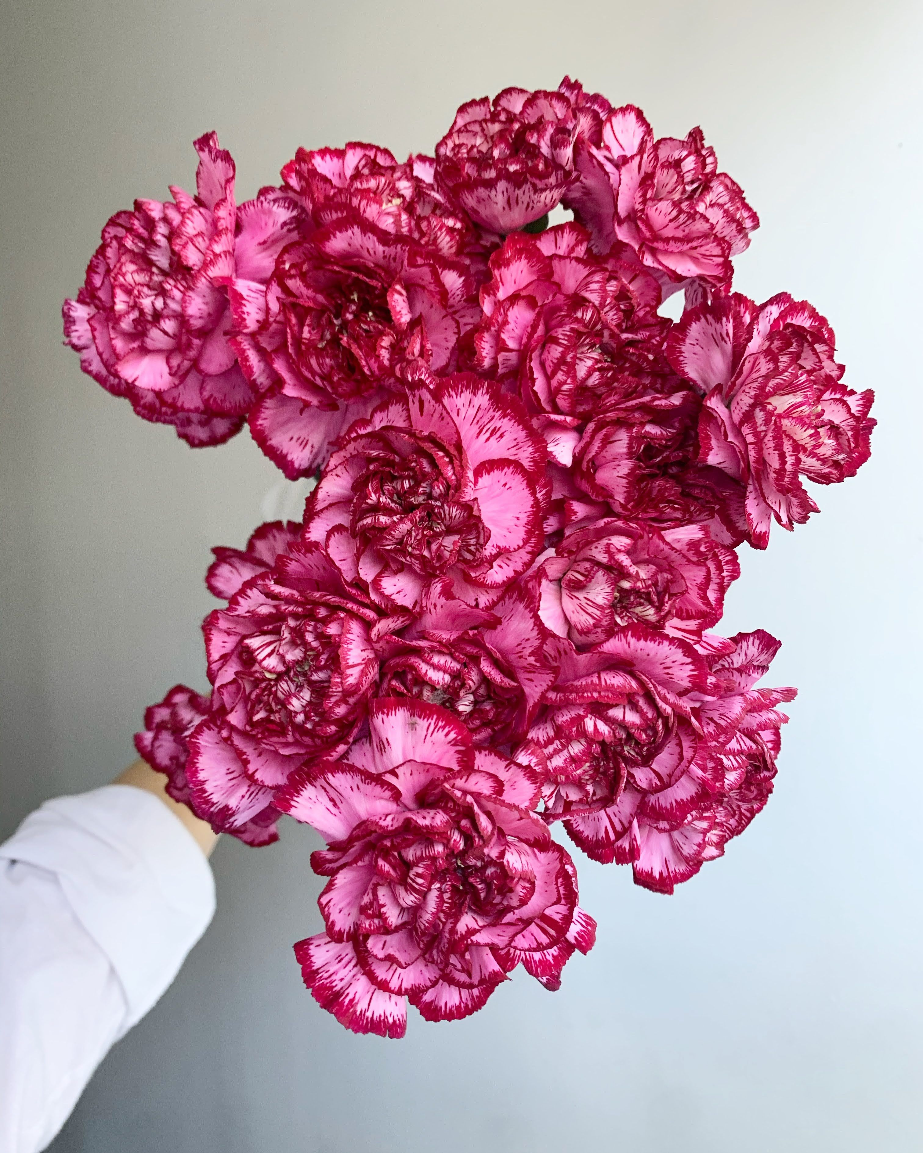 Purple Baccarat Carnations In 2021 Pink Flowers Carnations Floral