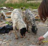 Setterine In Discarica Aiutatemi A Farle Adottare Dogs Animals