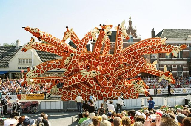 Bloemencorso, the annual parade of flowers, takes place in Zundert and features some of the most creative and modern examples of the floral sculpting form you're likely to see.