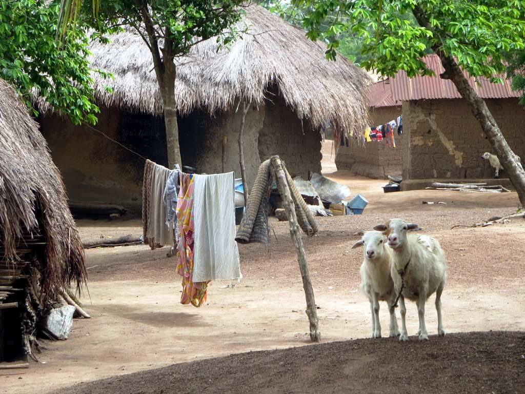 Domestic animals coexist with people at Mekoviade
