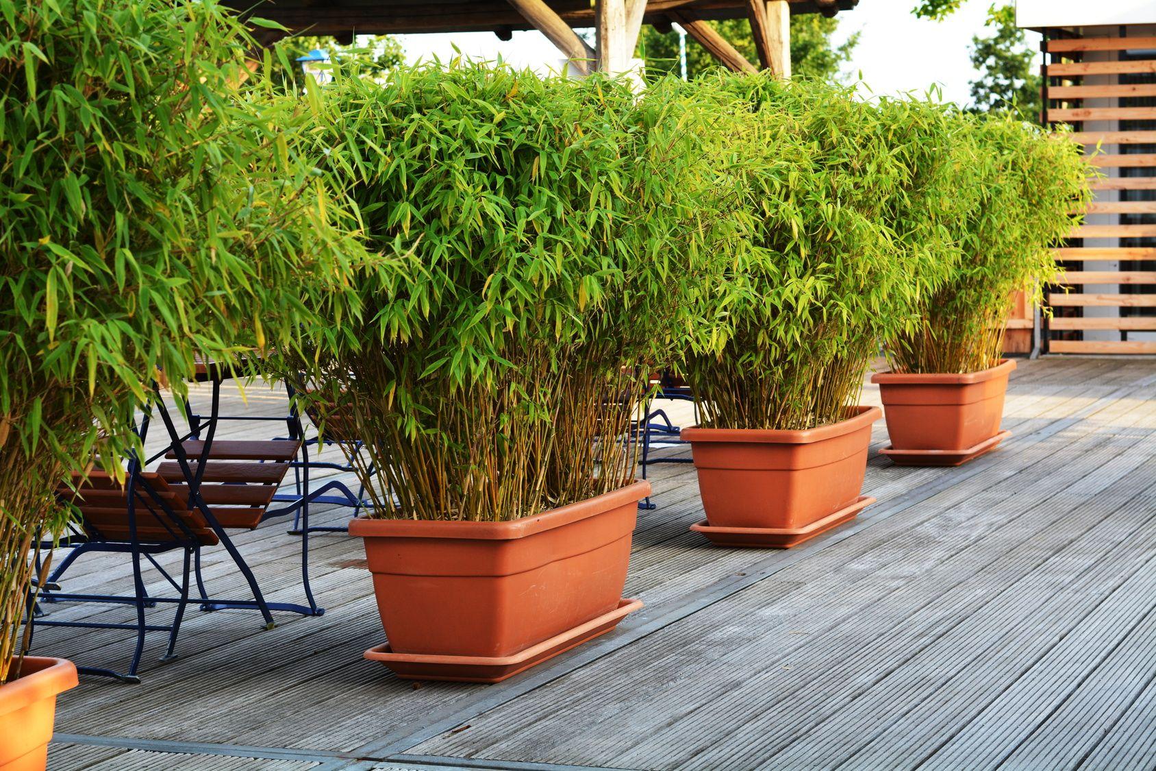 Pflanzen Balkon Sichtschutz With Images Bamboo Planter