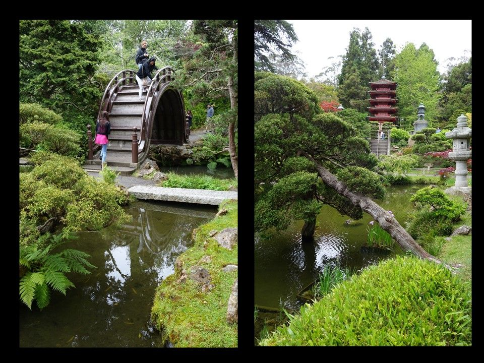 San Francisco Japanese Tea Garden Summer 2015