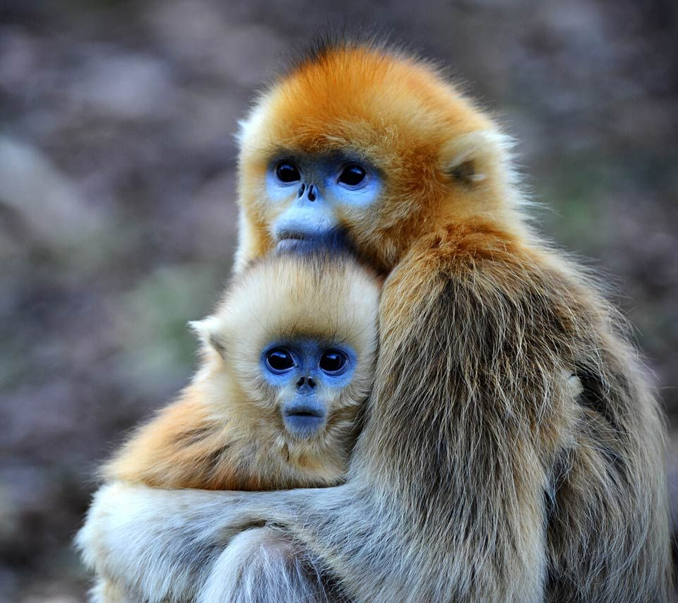 Mother and child (With images) Rare animals, Animals