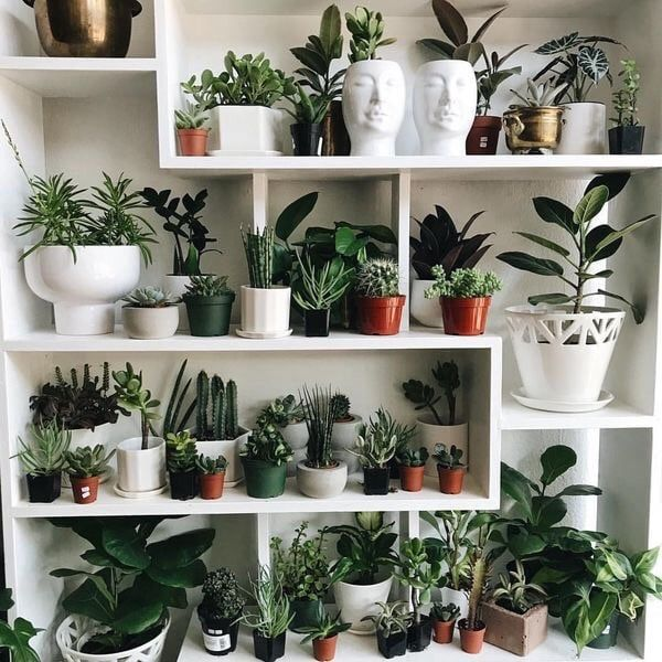 Rustic Living Roomdesign Ideas: Plant Wall #foundonweheartit #home #homeideas #homedesigns