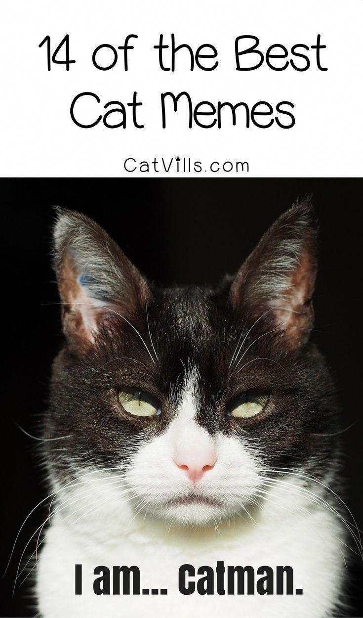 14 der besten KatzenMeme die uns laut zum Lachen bringen  Cat Fun and Humor
