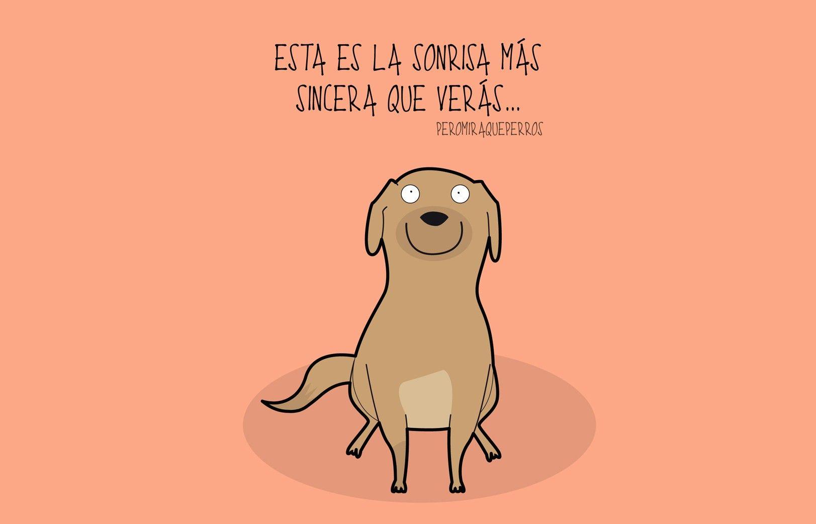 Pin De Pao Pi En Perros Perros Mascotas Perros Frases Y