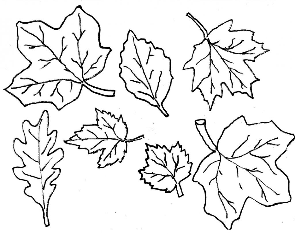 Fall Leaves Coloring Pages Pt9f Coloring Pages Leaves With