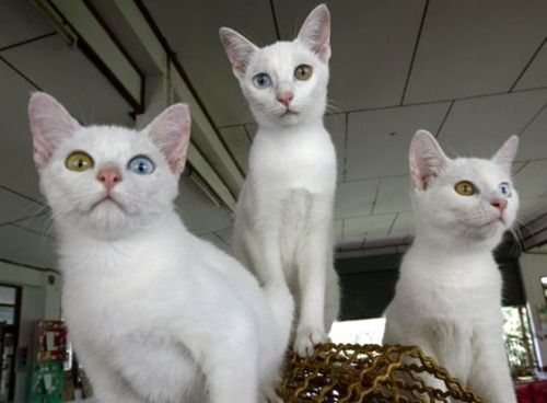 Wow 3 In One Litter Derpy Cats Cute Animals Animals Pets