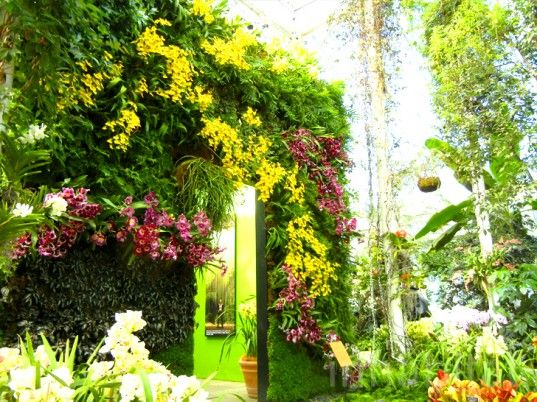 Patrick Blanc's Vertical Garden with 7,000 orchids!