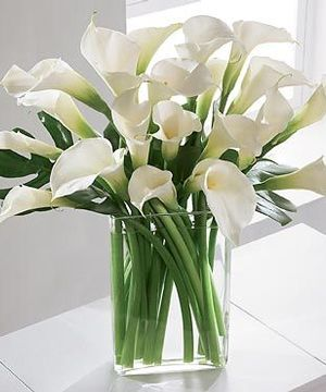 Luxe Calla Lilies By Beneva Flowers Sarasota Florist Same Day Flower Delivery Flower Delivery Valentines Flowers